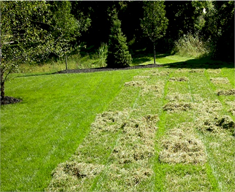 Get Lawn Dethatching in Kentucky for a Cheap Price